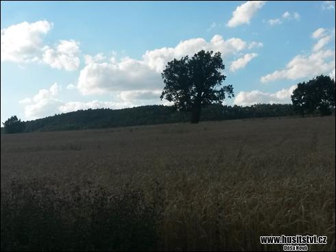 Lomany - husitské duby u Loman na Plzeňsku